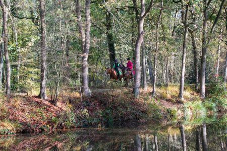 paard_bos1.jpg